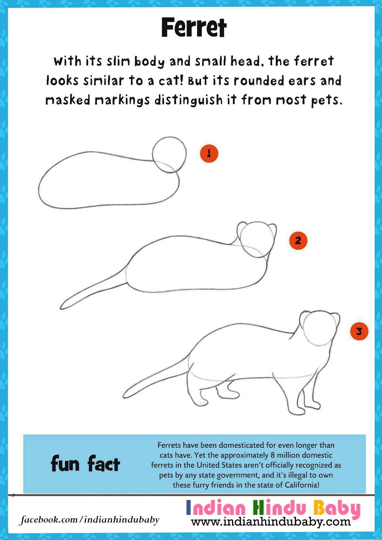 ferret are very similar to cat in looks teach your kid to draw and paint