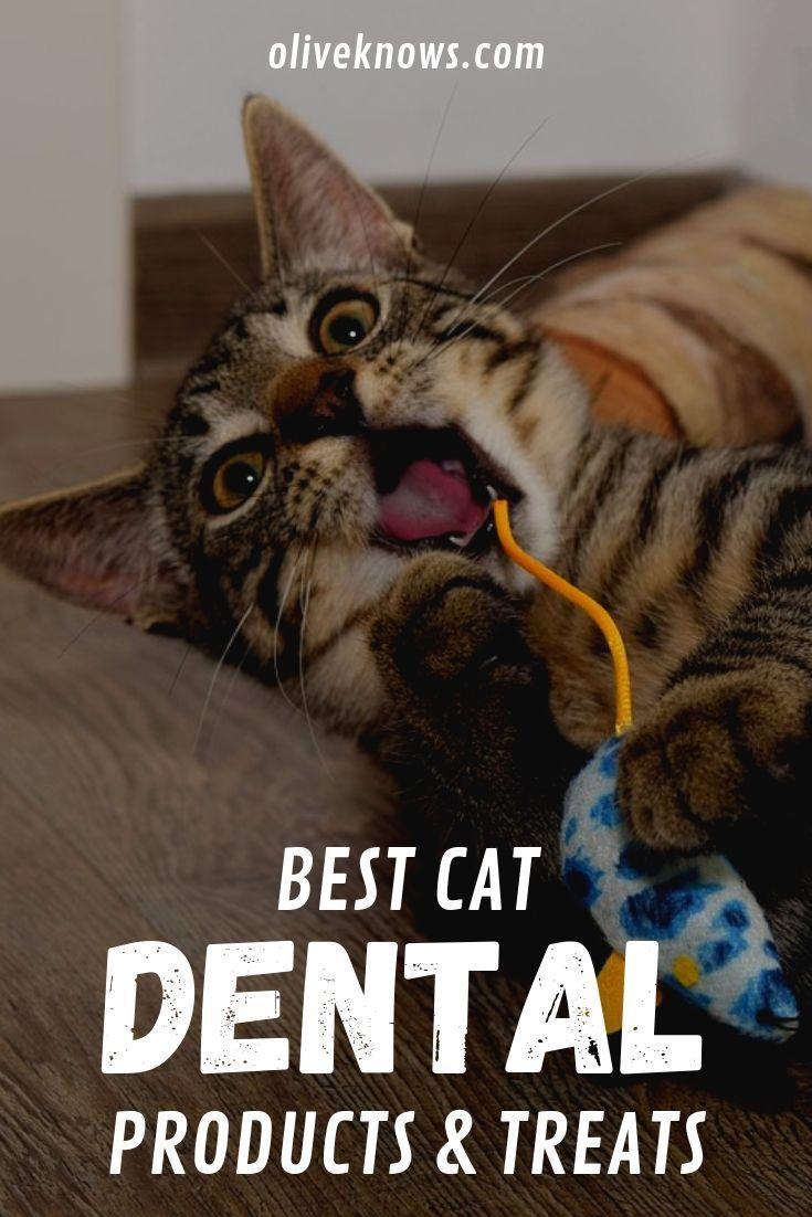 Best Cat Dental Products and Treats Cool cats, Cats, Cat