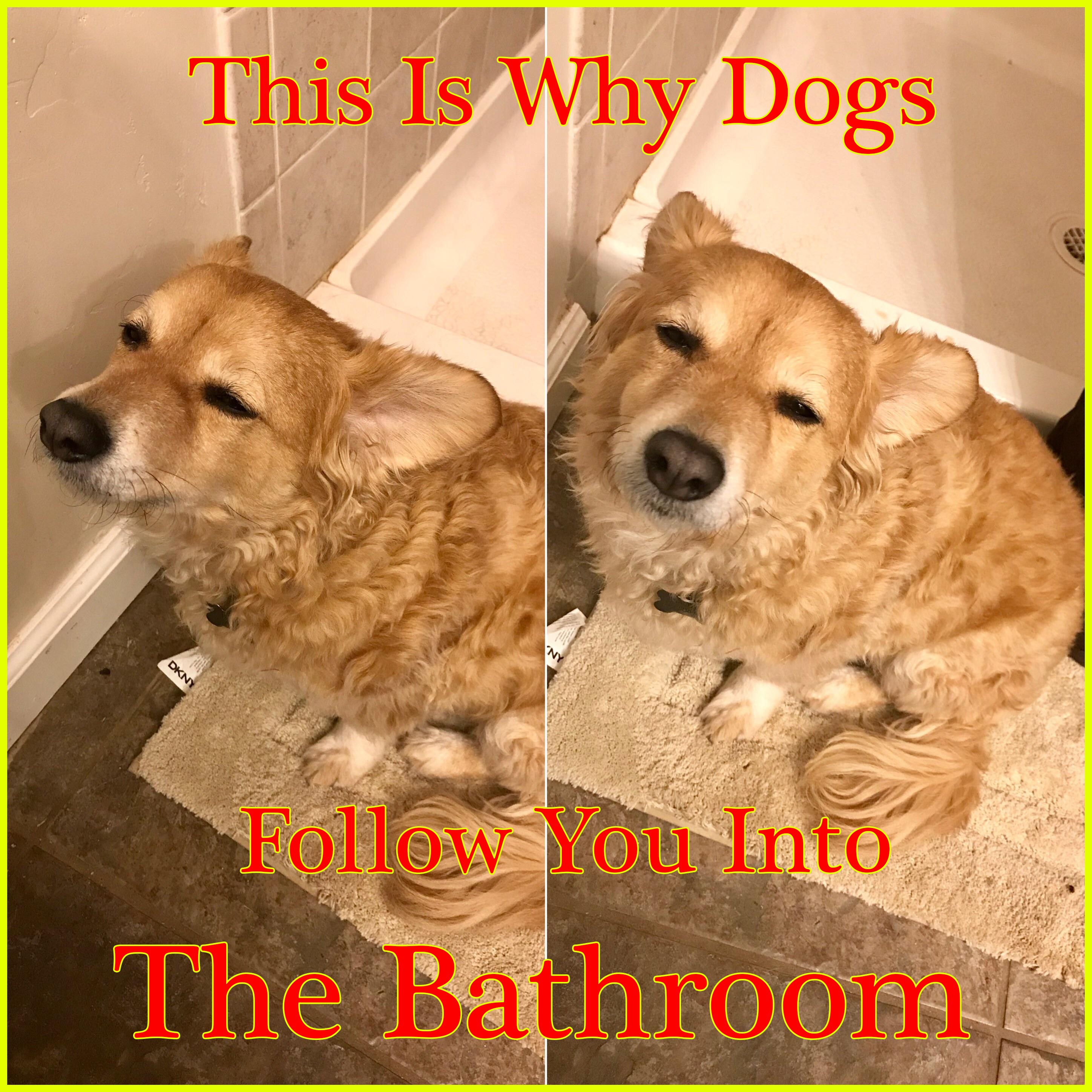 This Is Why Dogs Follow You Into The Bathroom I Never Knew This In 2020 Dogs Dog Costumes Dog Health