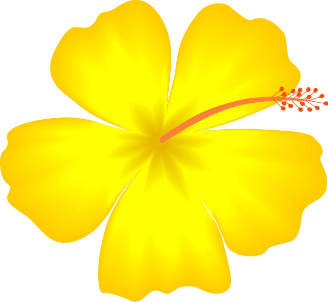 Yellow Hibiscus Hawaii State Flower Image Vector Clip Art Online Clipart Best Hawaiian Flower Drawing Flower Drawing Yellow Hibiscus