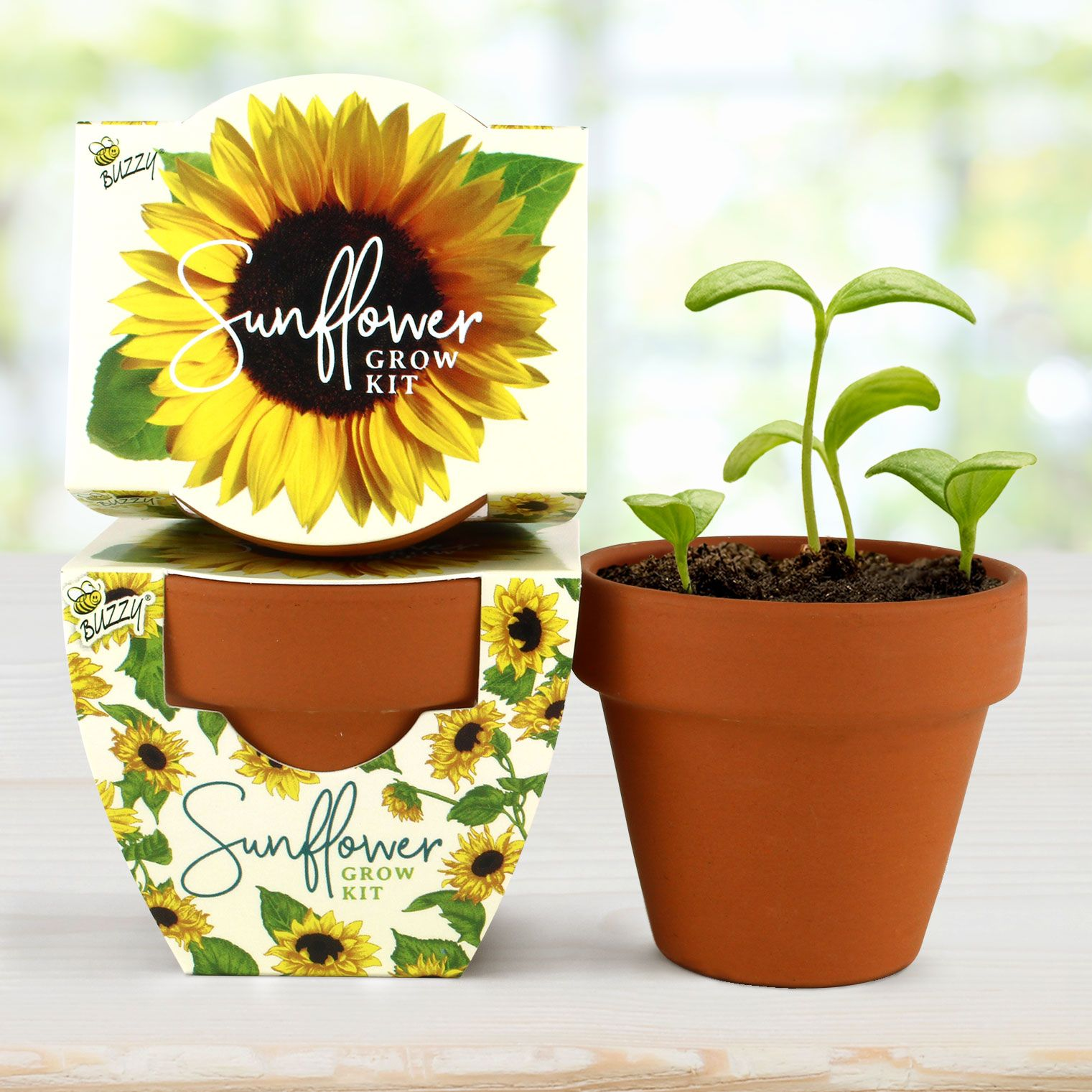 Wedding Favors Party And Event Favors Terra Cotta Minis Sunflower Daydream Mini Sunflowers Event Favors Sunflower