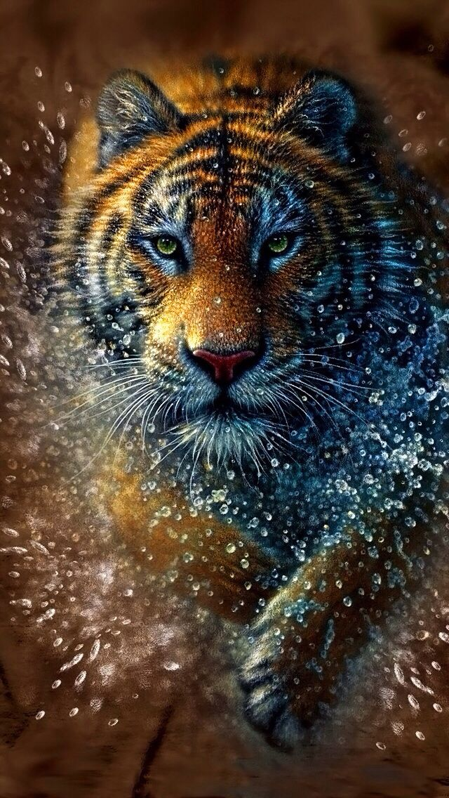 TIGER IPHONE WALLPAPER BACKGROUND