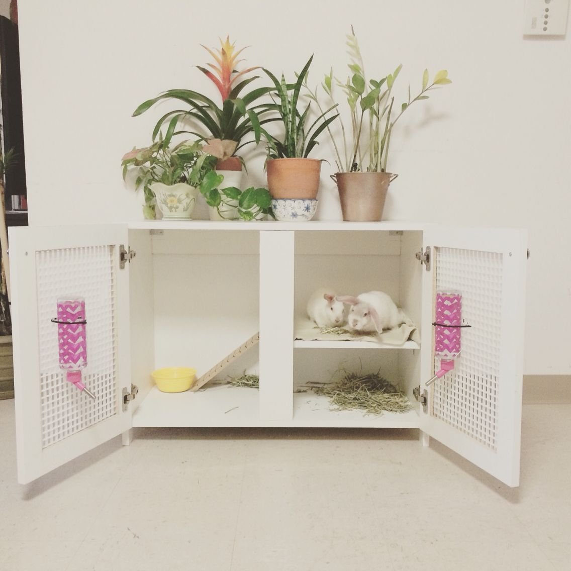 1000 ideas about indoor rabbit on pinterest rabbit for Rabbit house images