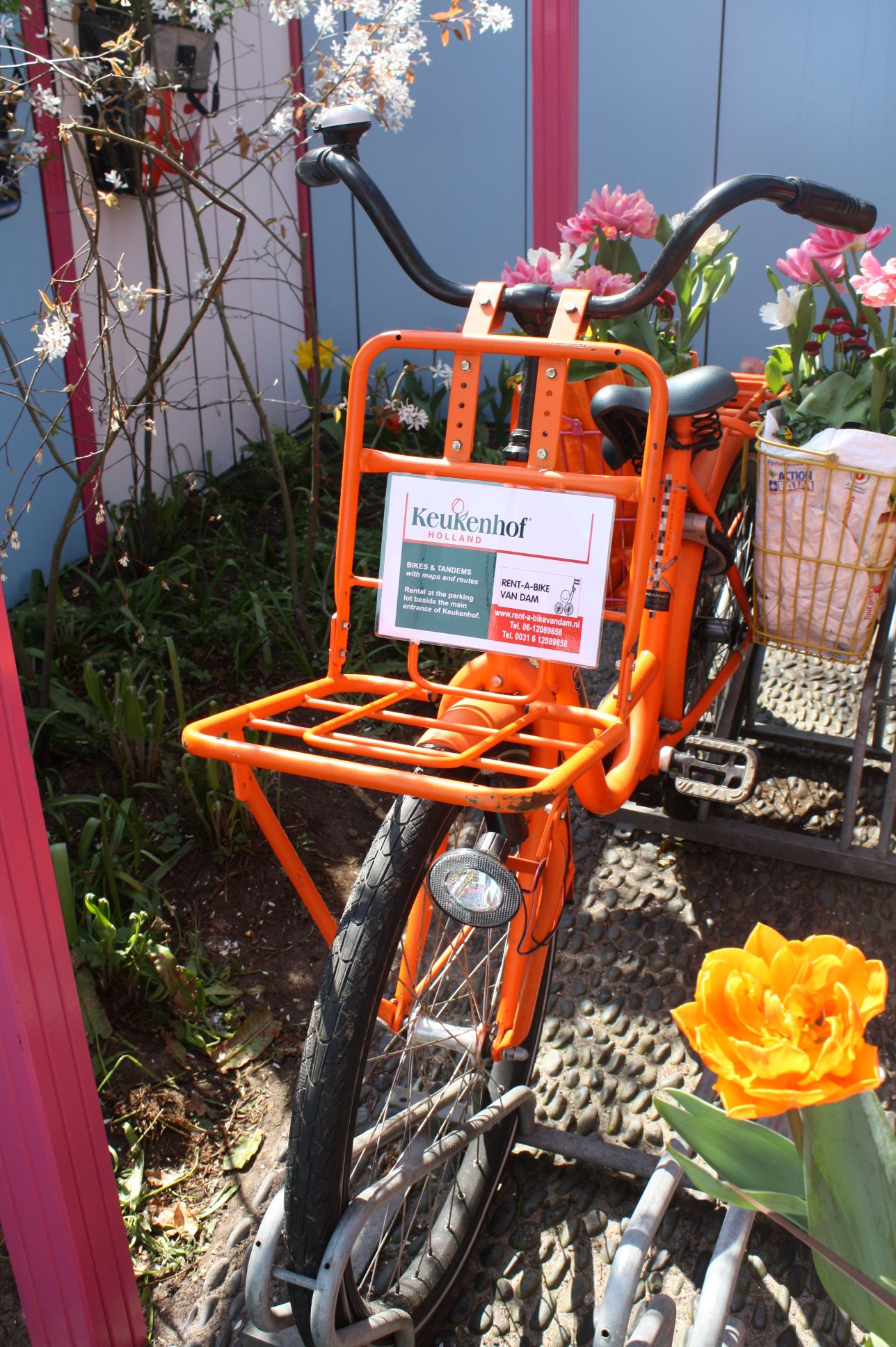 One Day I Will Rent A Bike In Keukenhof Dutch Bikes Pinterest