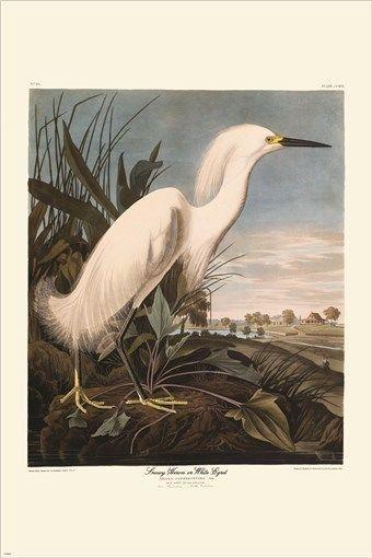 snowy heron VINTAGE AUDUBON POSTER detailed wildlife collectors 24X36 RARE
