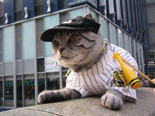 Go Hosin Tigers! So kawaii!!