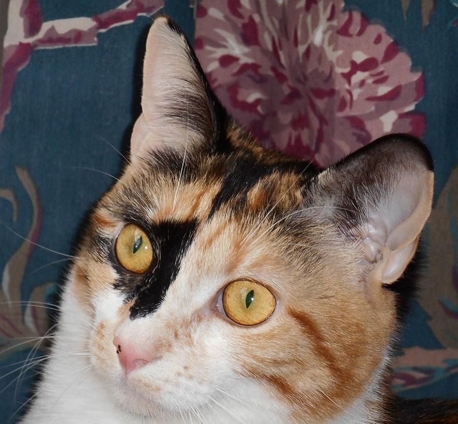 Adopt Marker On Cats Kittens Pet Adoption Animal Help