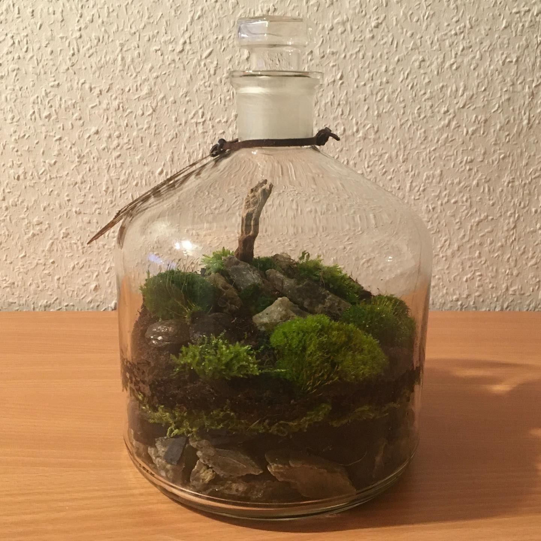 Moos Im Glas Von Sandraoliver Pflanzen Im Glas Pflanzen Terrarium Minigarten Im Glas In 2020 Moss Plant Small Jars Plants