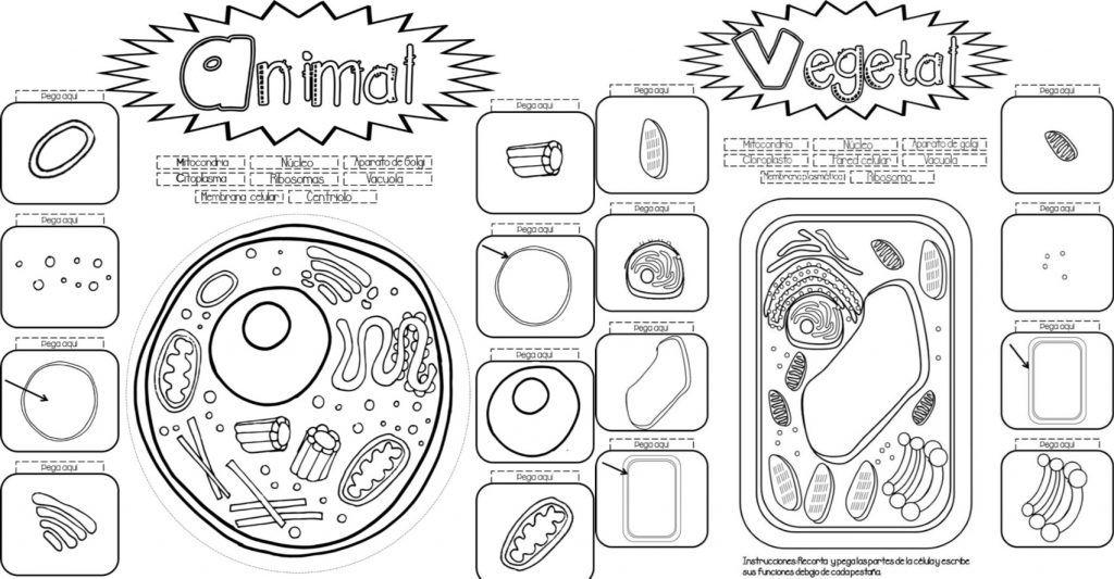 Fabuloso interactivo para enseñar y aprender sobre la célula vegetal ...