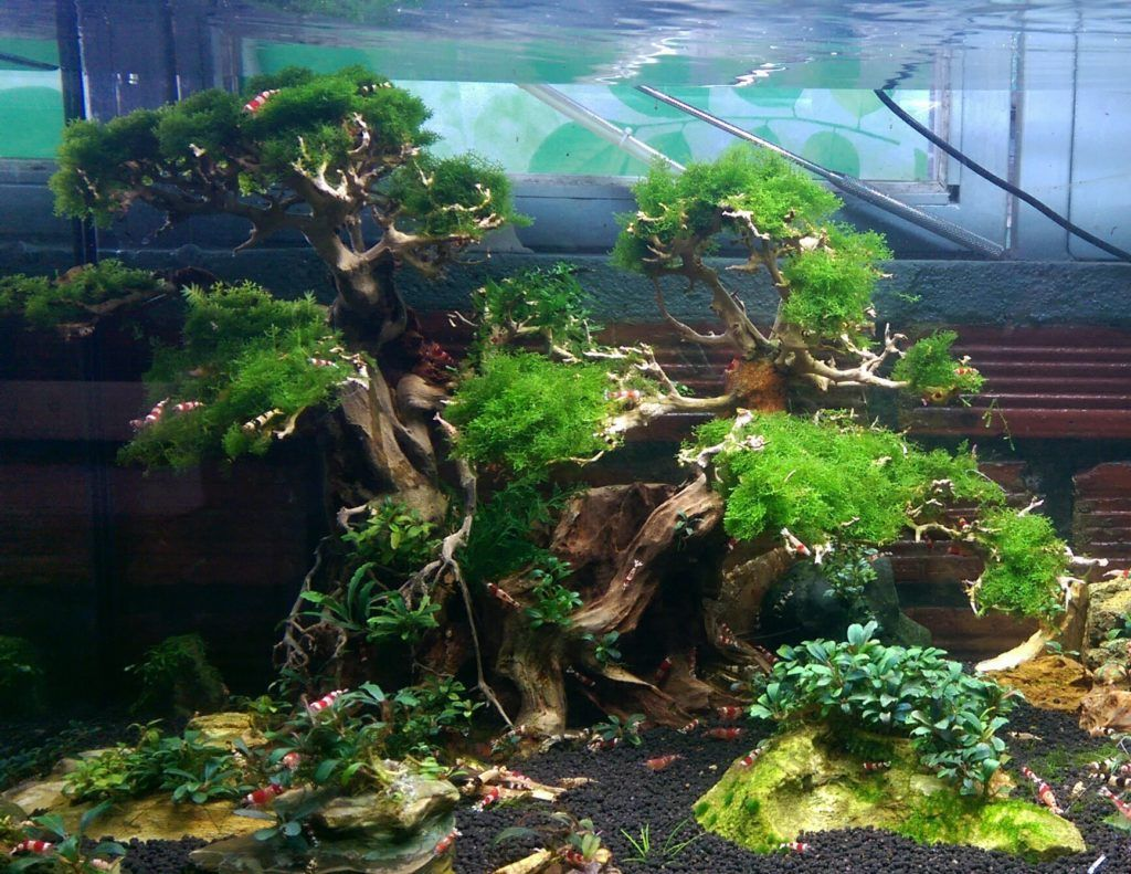 Freshwater fish tank ideas aquascape inspiration fresh