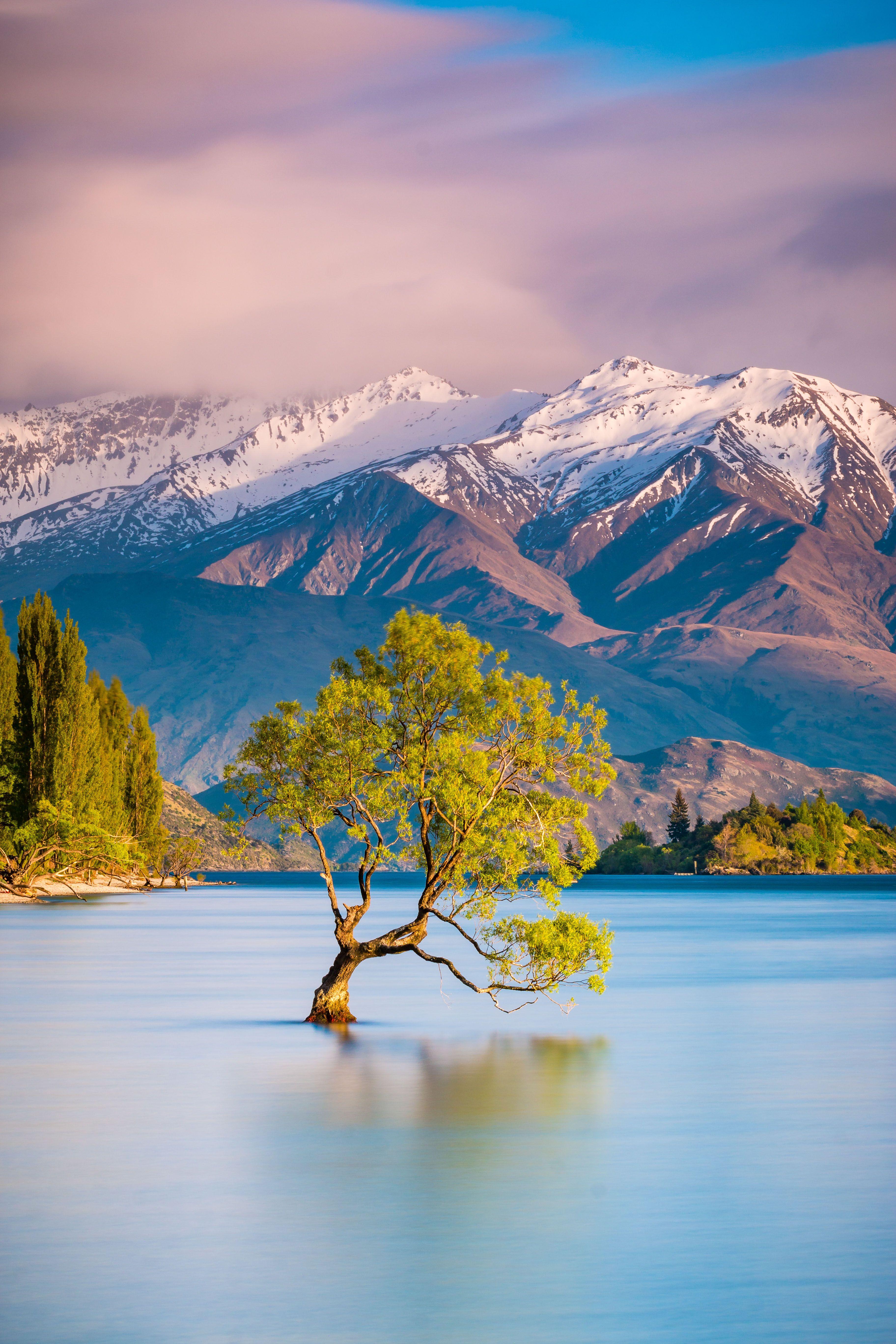 , Wanaka Tree, New Zealand, My Travels Blog 2020, My Travels Blog 2020