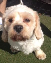 Adopt Kevin On Poodle Mix Dogs Adoption Cat Urine