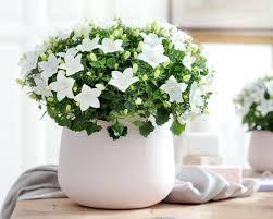 Resultat De Recherche D Images Pour Compositions Plantes Fleuries D