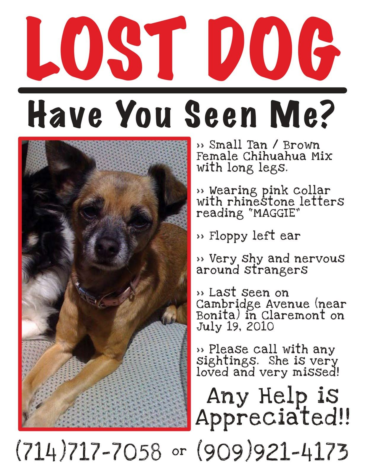 Flyers For Missing Pets In Texas  Lost Dog Flyer  Pets Missing