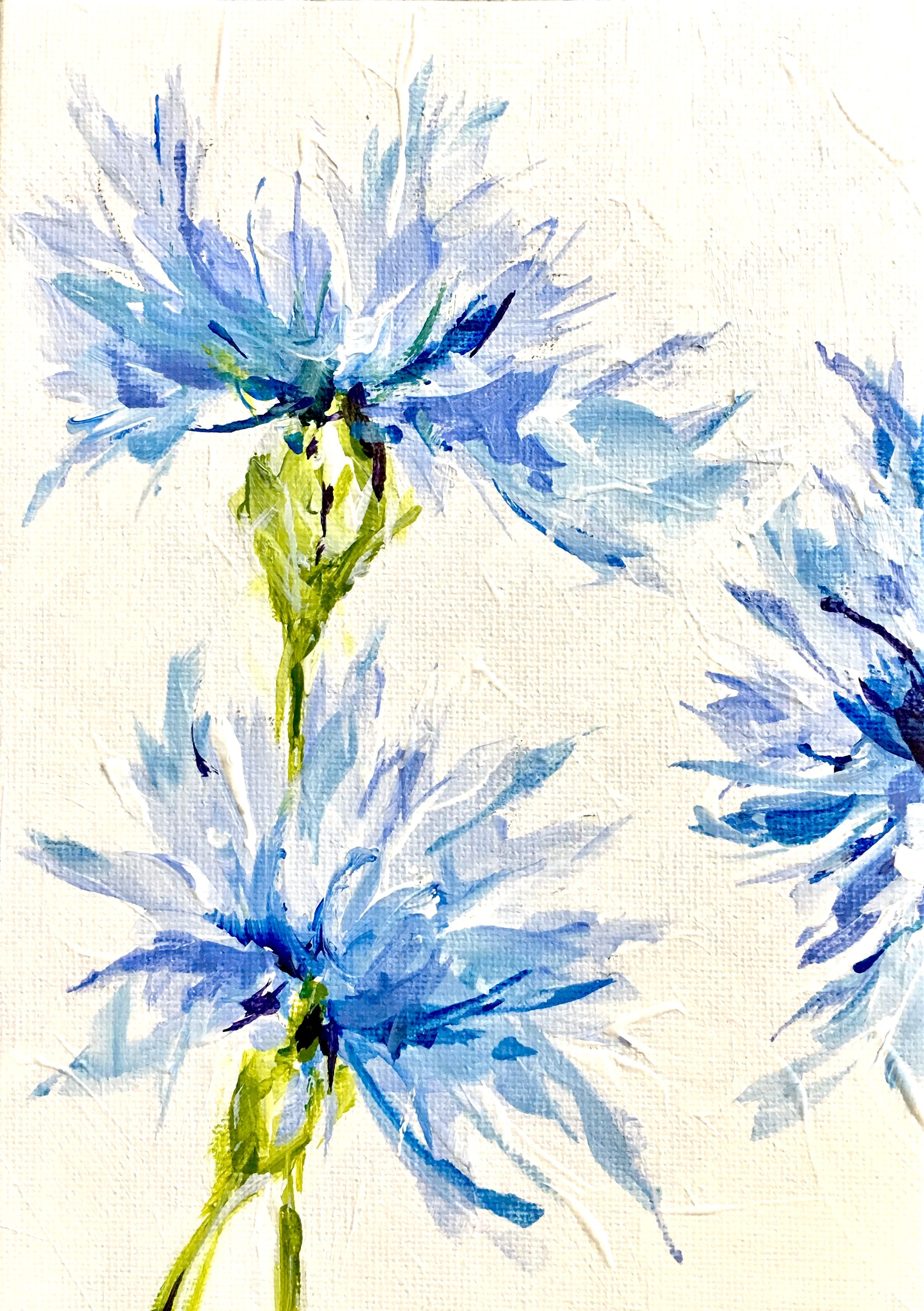 Cornflower Als Symbol Of Hope Www Susanpepedesigns Com