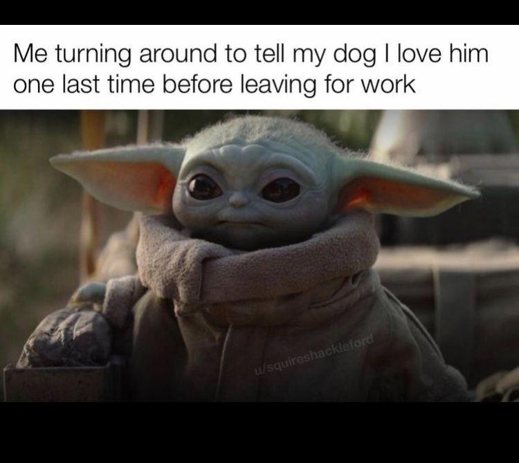 Baby Yoda Dog Turn Around Love Star Wars Memes Star Wars Humor Yoda Meme