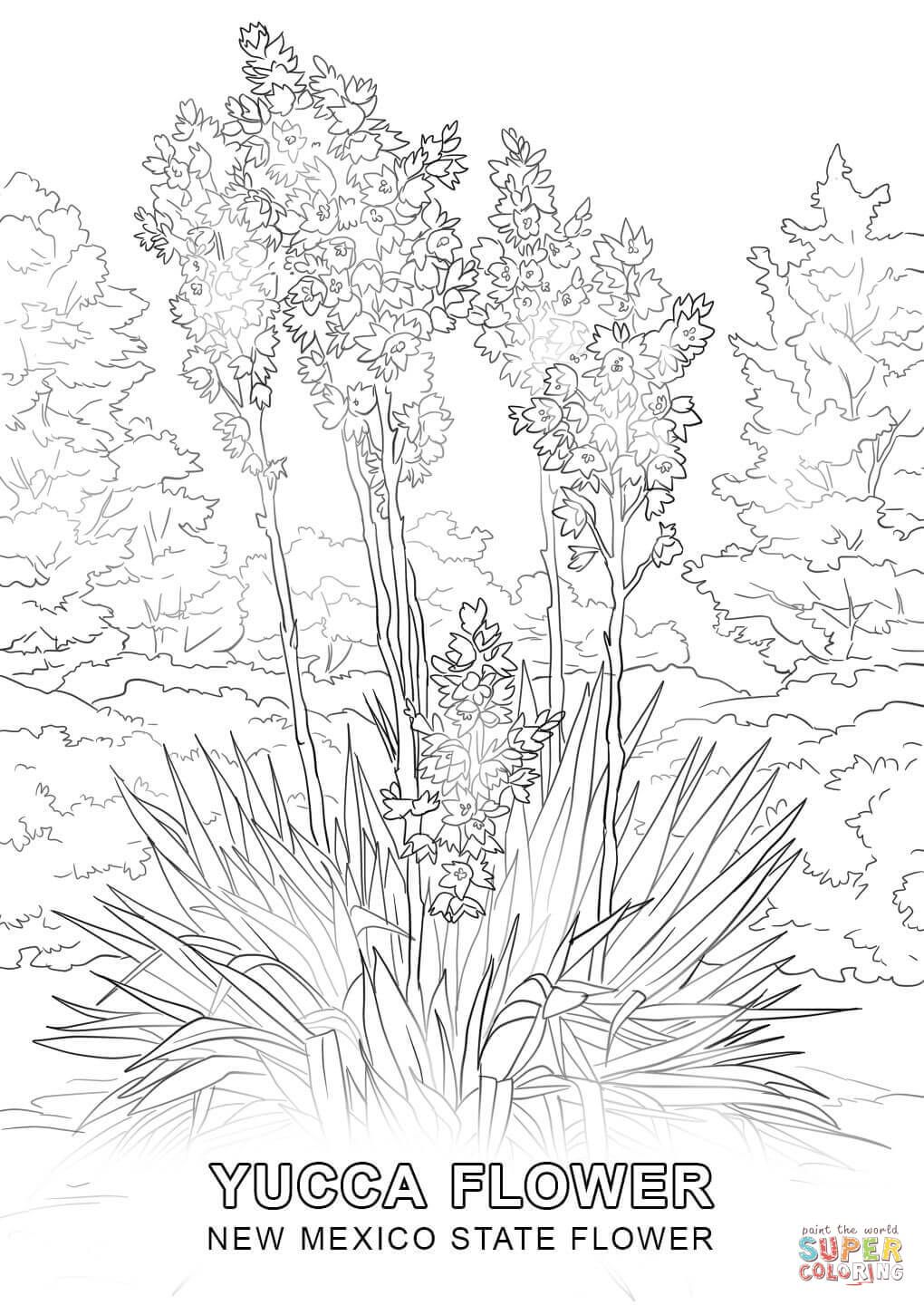 New Mexico State Flower Coloring Page Jpg 1020 1440