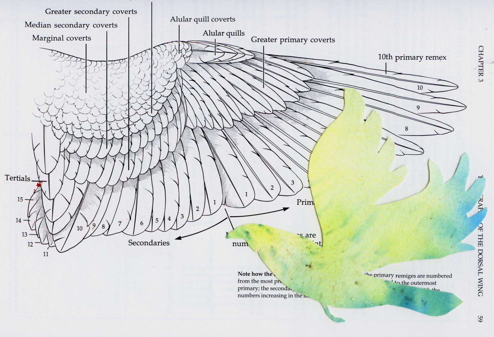 24b6daf750cfbdb49addf9da4f92f5d6 hawk skeleton diagram wiring diagrams control