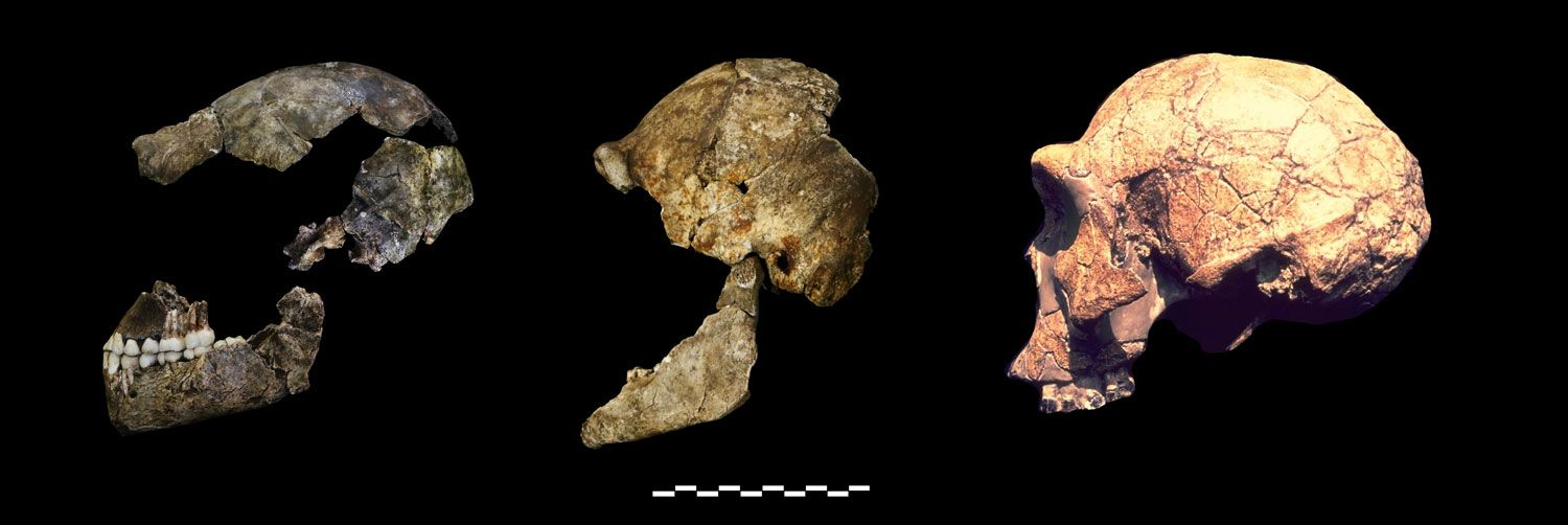"""Comments for """"What Can the Fossil Record Tell Us about Human Origins?"""" and """"The…"""