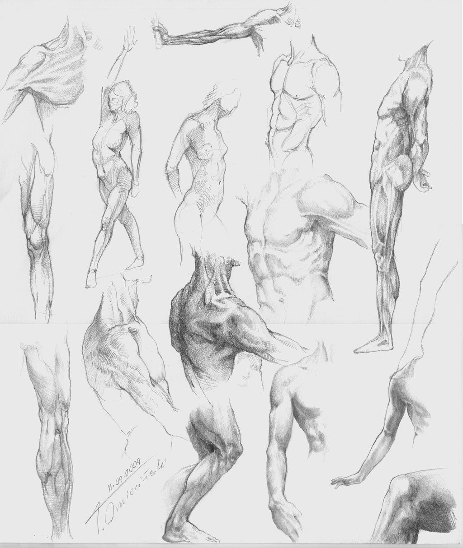 Studies Of The Human Body By Tomeko On Deviantart Sketch
