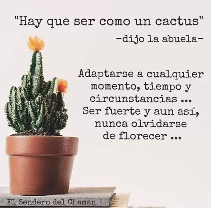 Cactus Cactus Quotes Inspirational Phrases Cactus