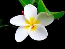 beyaz çiçek resimleri ile ilgili görsel sonucu