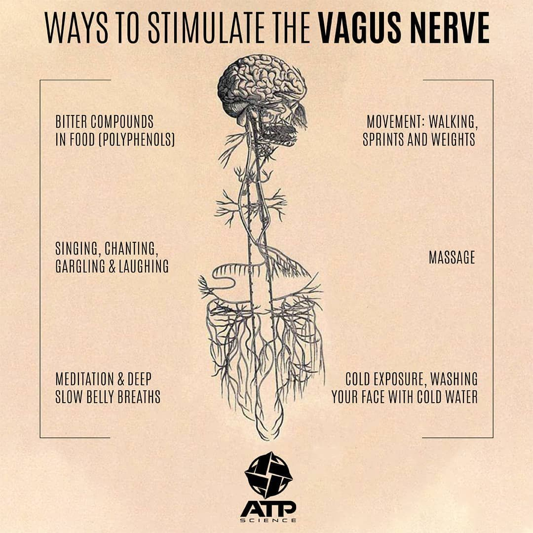 """ATP Science on Instagram: """"The Vagus Nerve, also known as ..."""