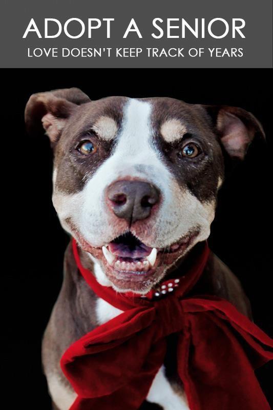 Chris A1040521 Dog Adoption Pet Adoption Pet News