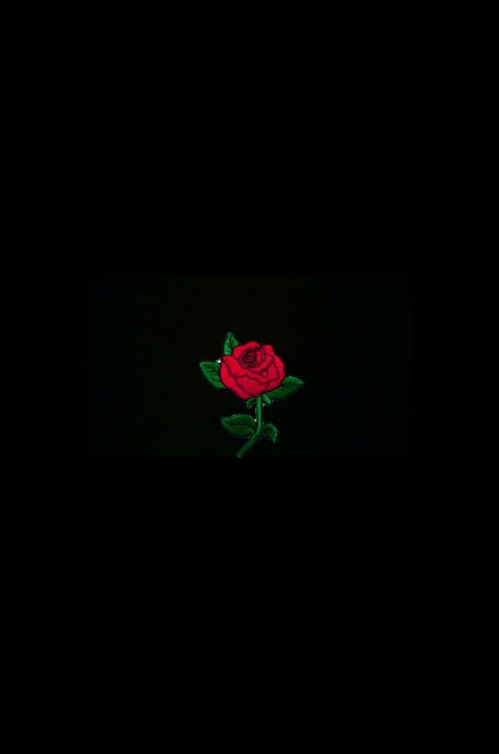 Wallpaper rose flower⚘⚘⚘⚘