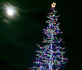 A San Domenico un albero di Natale da 30 metri visibile da tutta la valle - Ossola 24 notizie