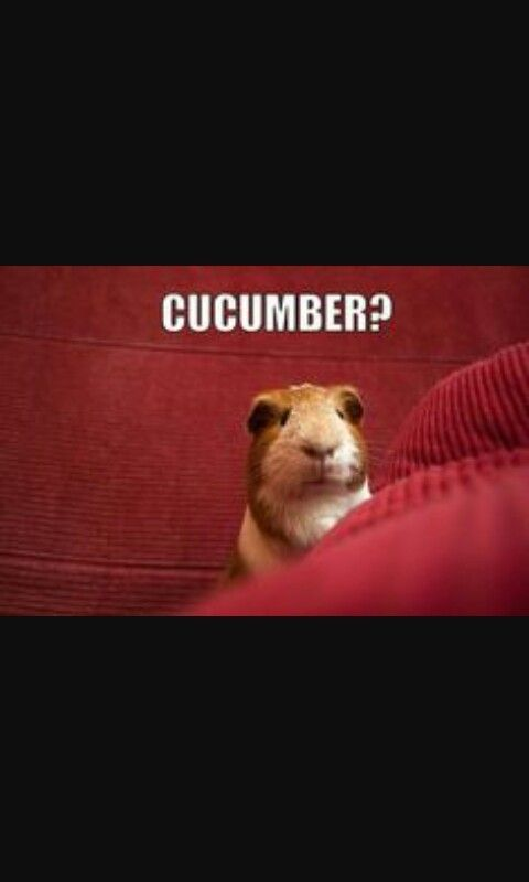They really love the cucumber!!:)