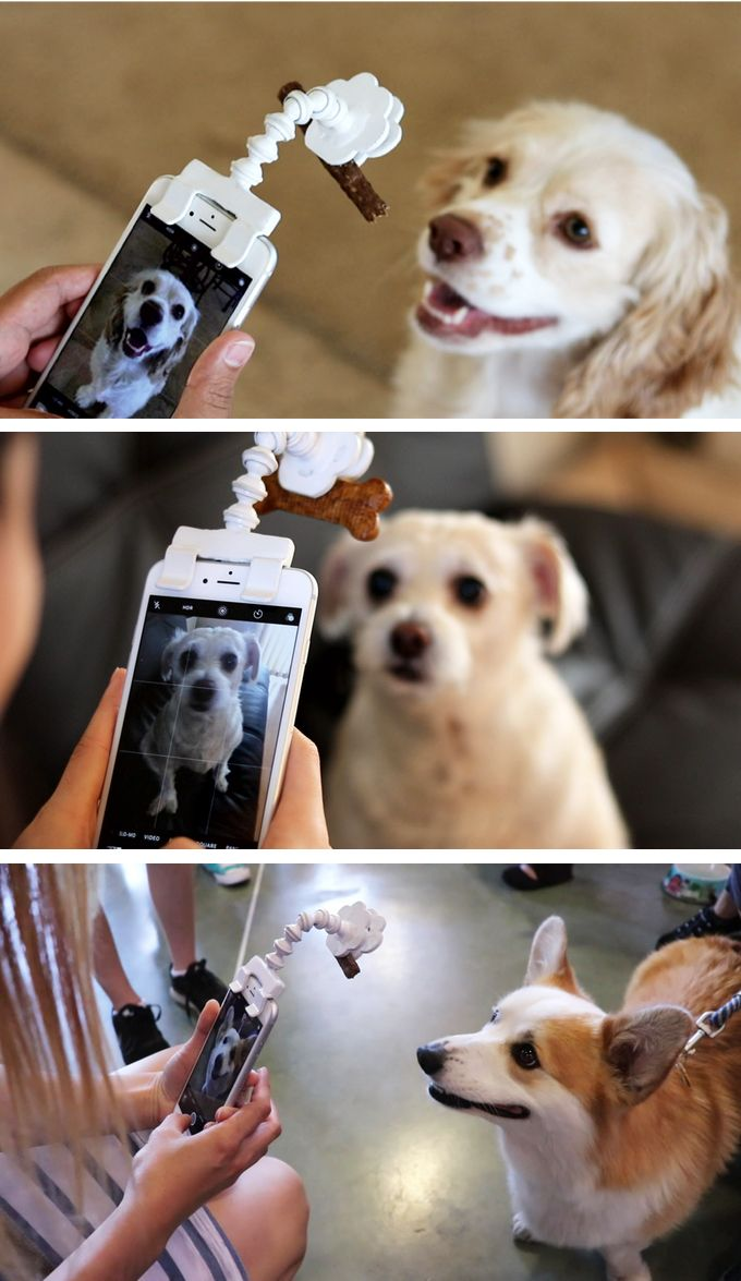 Smartphone Treat Holder Easily Attaches to Phone to Help Capture Great Pet Portraits is part of Smartphone Treat Holder Easily Attaches To Phone To Help - Flexy Paw helps you become an expert in pet photography  The phone attachments capture perfect pet portraits by getting animals to look at the camera