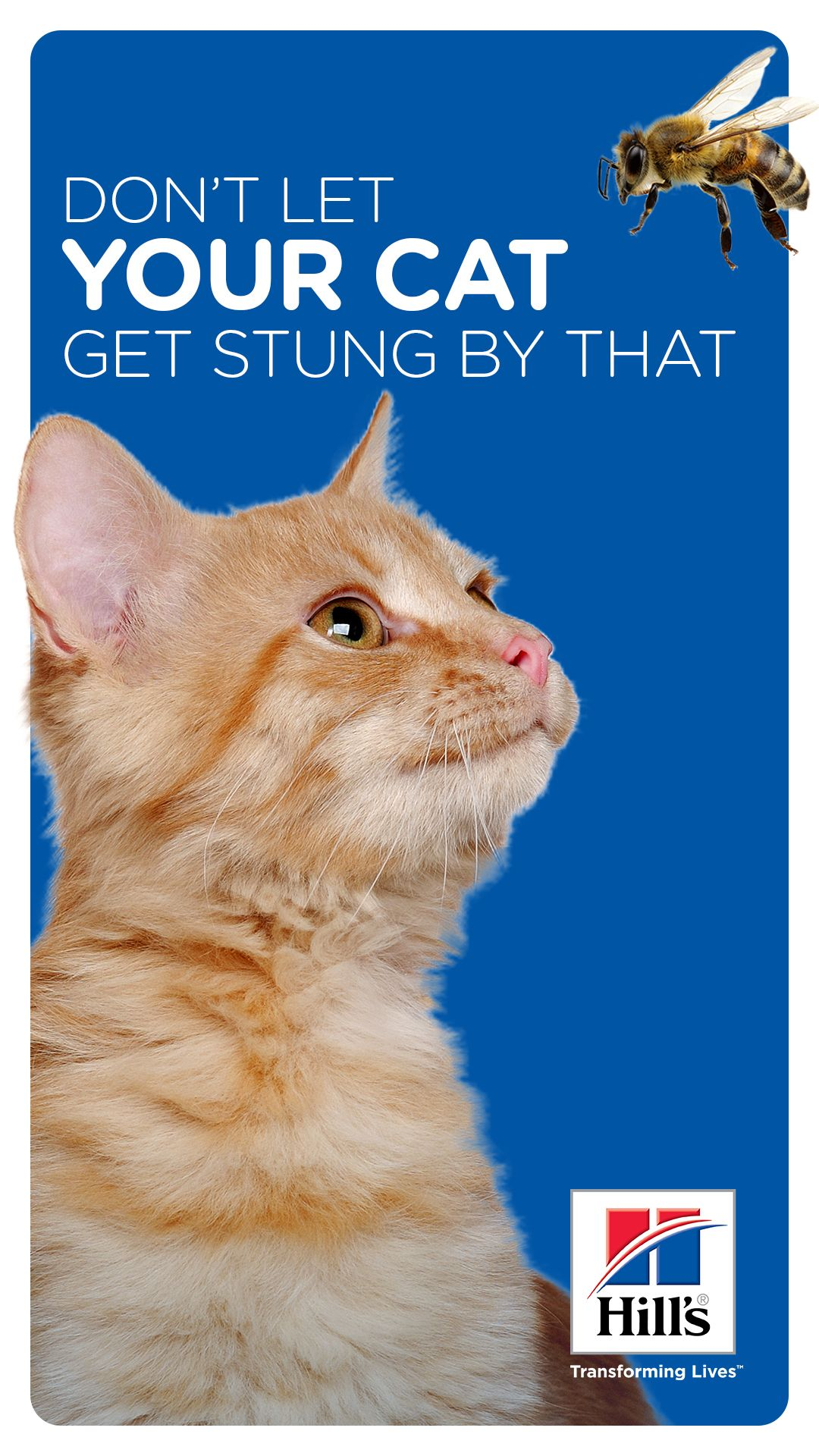 Cat Stung By Bee Or Wasp What You Need To Know Hills Pet Cats Cat Care Indoor Cat