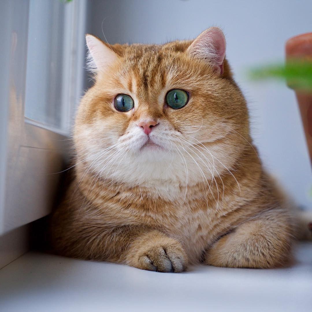 52 5k Likes 292 Comments Hosico Cat Hosico Cat On Instagram Happy December Rpg