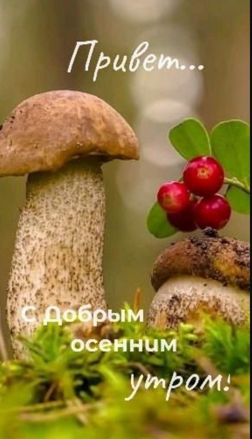Пин от пользователя Inna Litvinova на доске картинки для ...