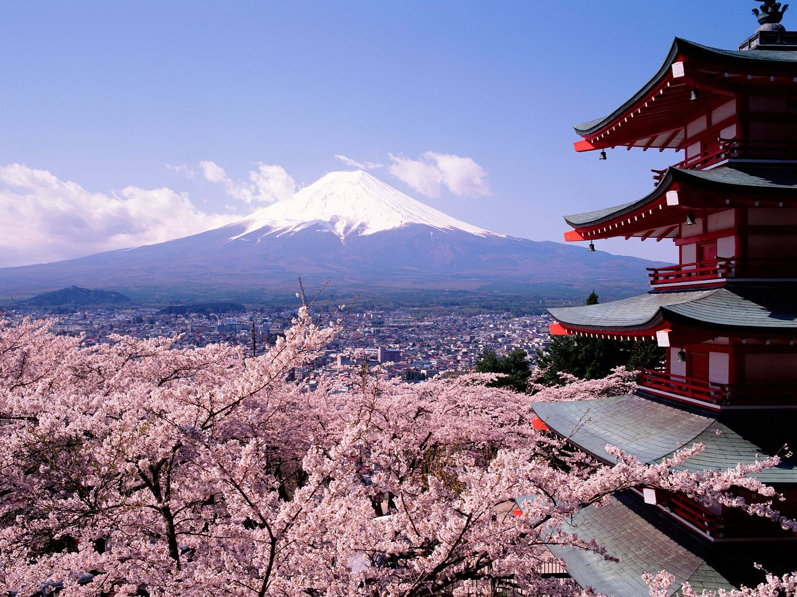 """Résultat de recherche d'images pour """"cerisier en fleur japon"""""""