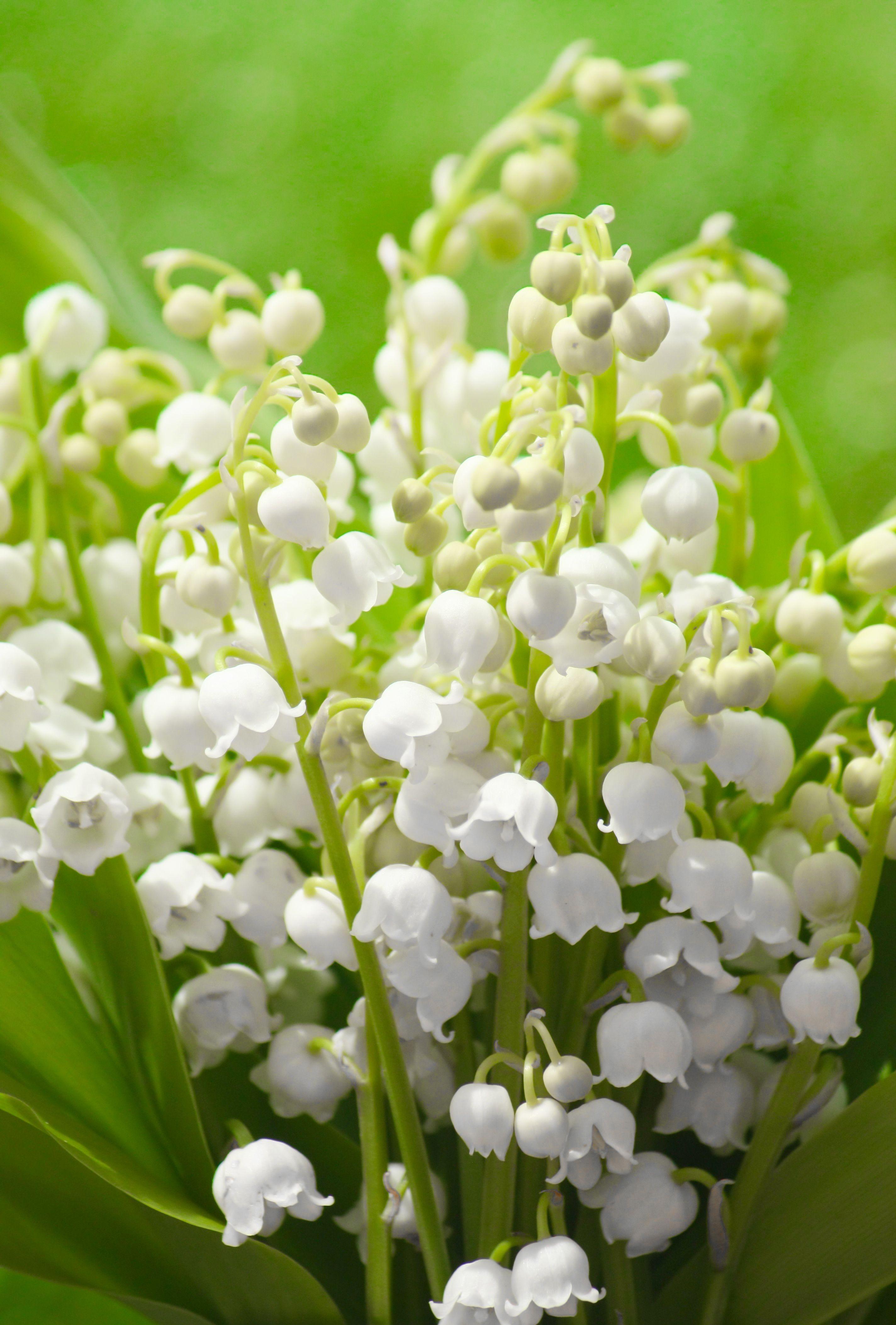 Mon Jardin En Avril Épinglé sur mon jardin blanc