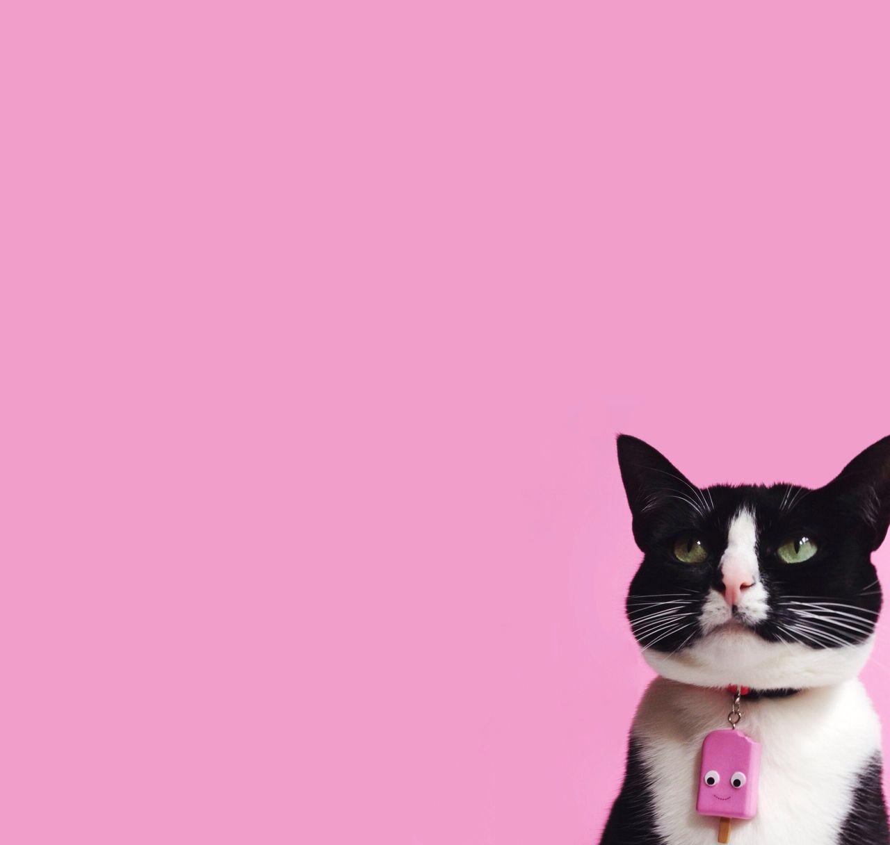 Gatos, Cosas Para Gatos Y