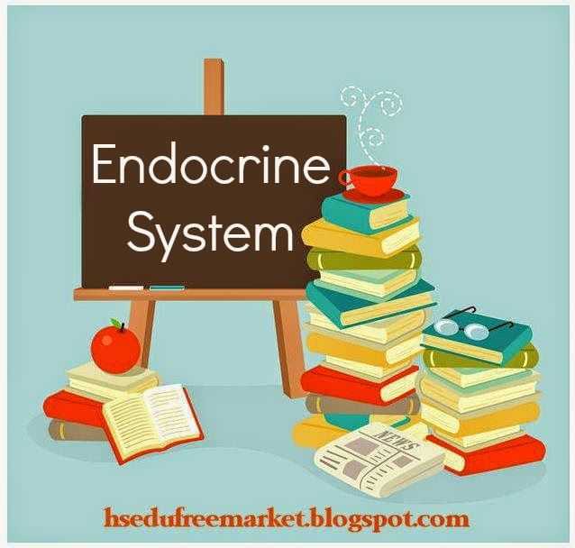 Free resources for teaching about the endocrine system in your ...
