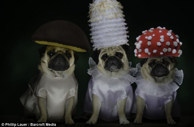 Having Fungi Bono Blue And Roxy Dressed As Mushrooms Dog