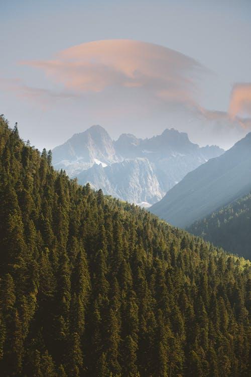 Photo by Yaroslav Shuraev on Pexels