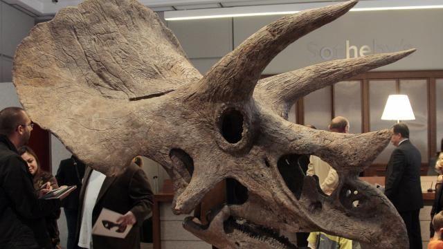 'Triceratops kon verrassend goed kauwen' | NU - Het laatste nieuws het eerst op NU.nl