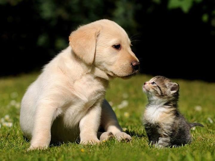 Totifun Fun All Around The World Cute Puppies And Kittens Kittens And Puppies Cute Cats And Dogs