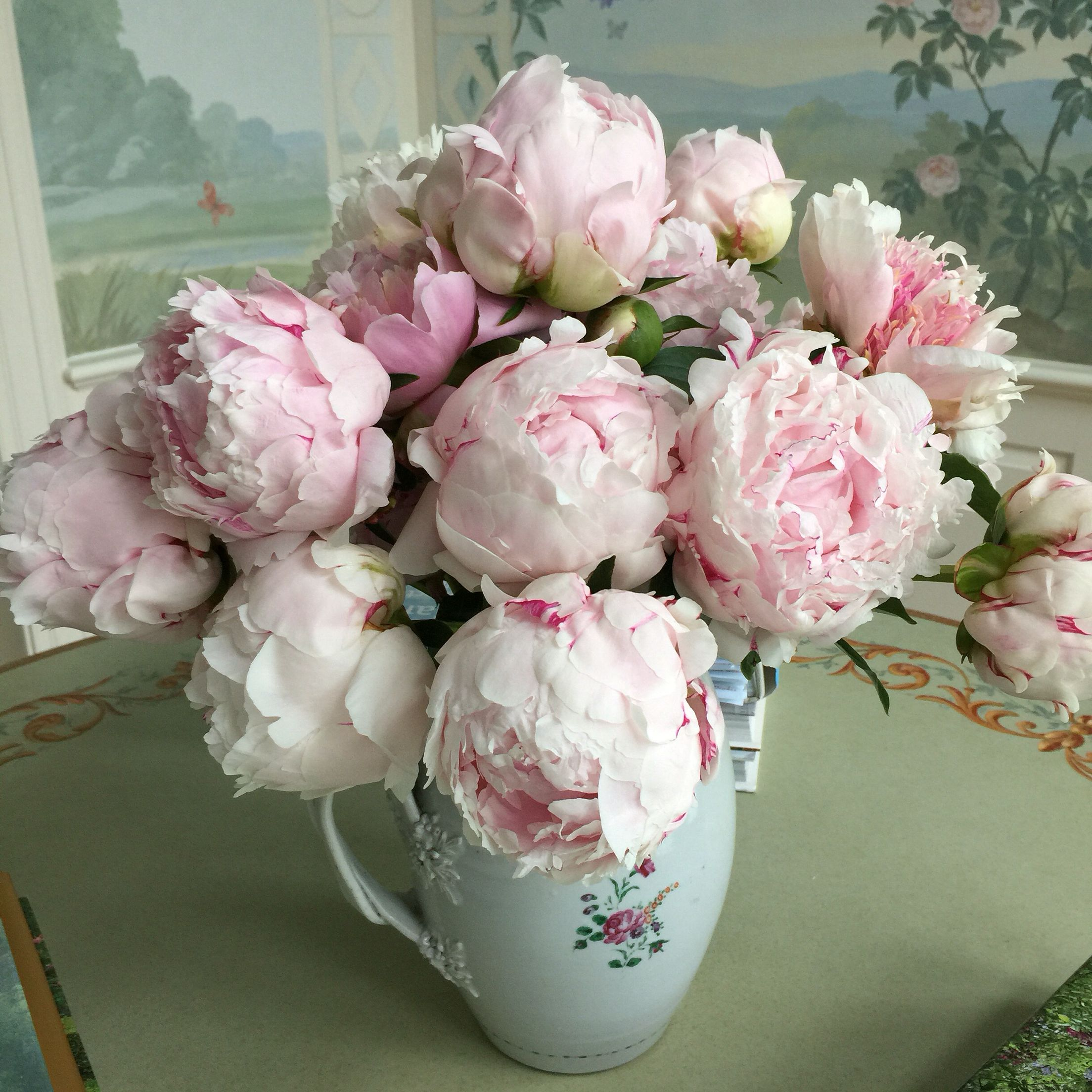 My favorite , Sarah Bernhardt's from my garden...