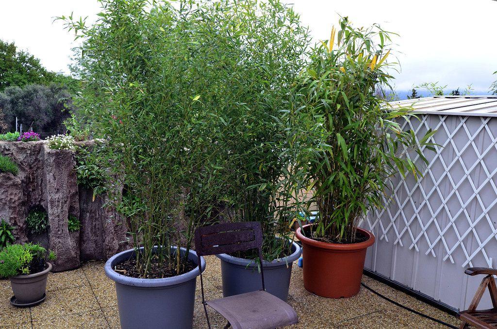 brise vue vegetale pour terrasse  Recherche Google  Amnagement extrieur  Plants