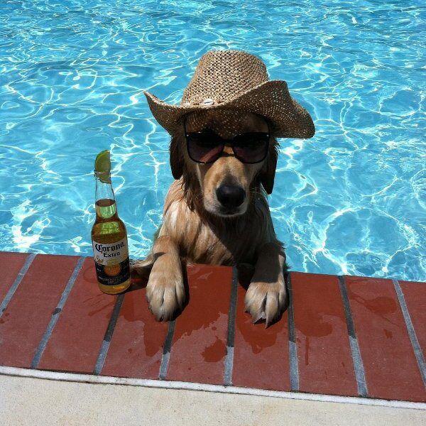 ☀ l été c est aussi pour les chiens.....