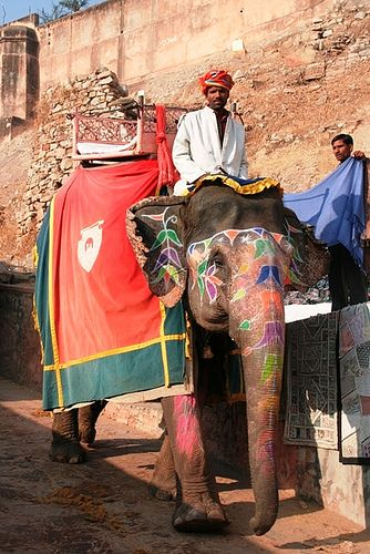 Journey down from Amber Fort!