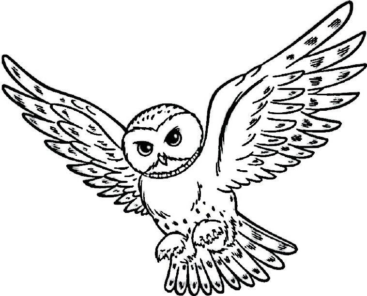 Harry Potter Tegninger til Farvelægning. Printbare