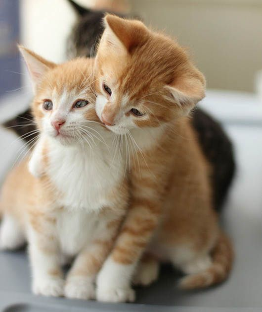 June 4 is National Hug Your Cat Day Cute cats photos