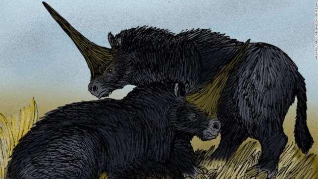 Hallan restos de un verdadero unicornio | nayaritenlinea.mx